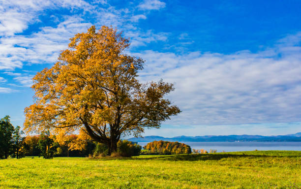 Vermont fall foliage stock photo