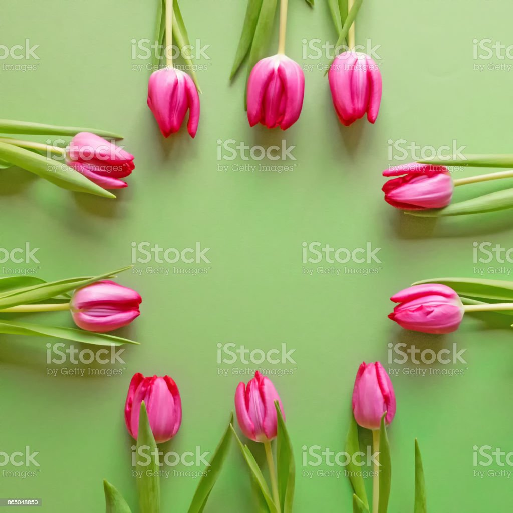 Vernal background of green cardboard with pink blossoms of tulips at the edge stock photo