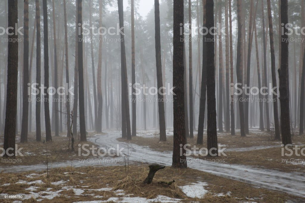 Vernal forest fogs. stock photo