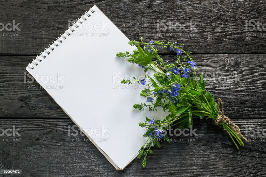 Veronica Chamaedrys and notebook stock photo