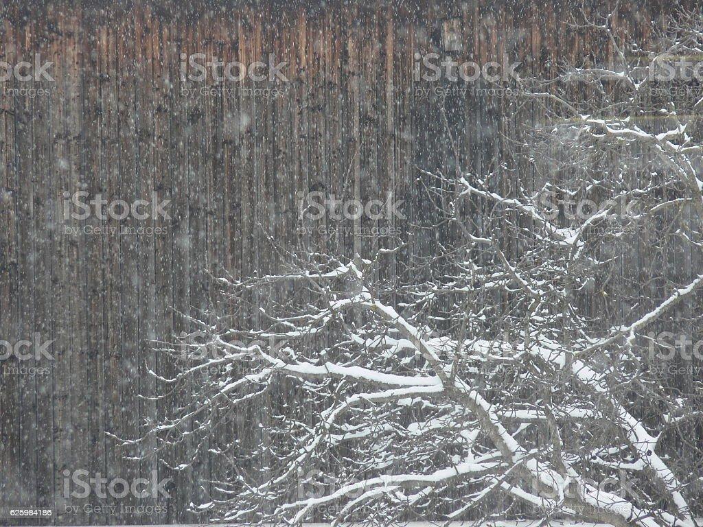 Verschneiter Wald stock photo