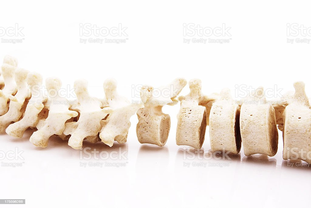 Vertebral column stock photo