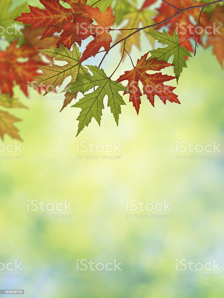 Vertical Autumn Background royalty-free stock photo