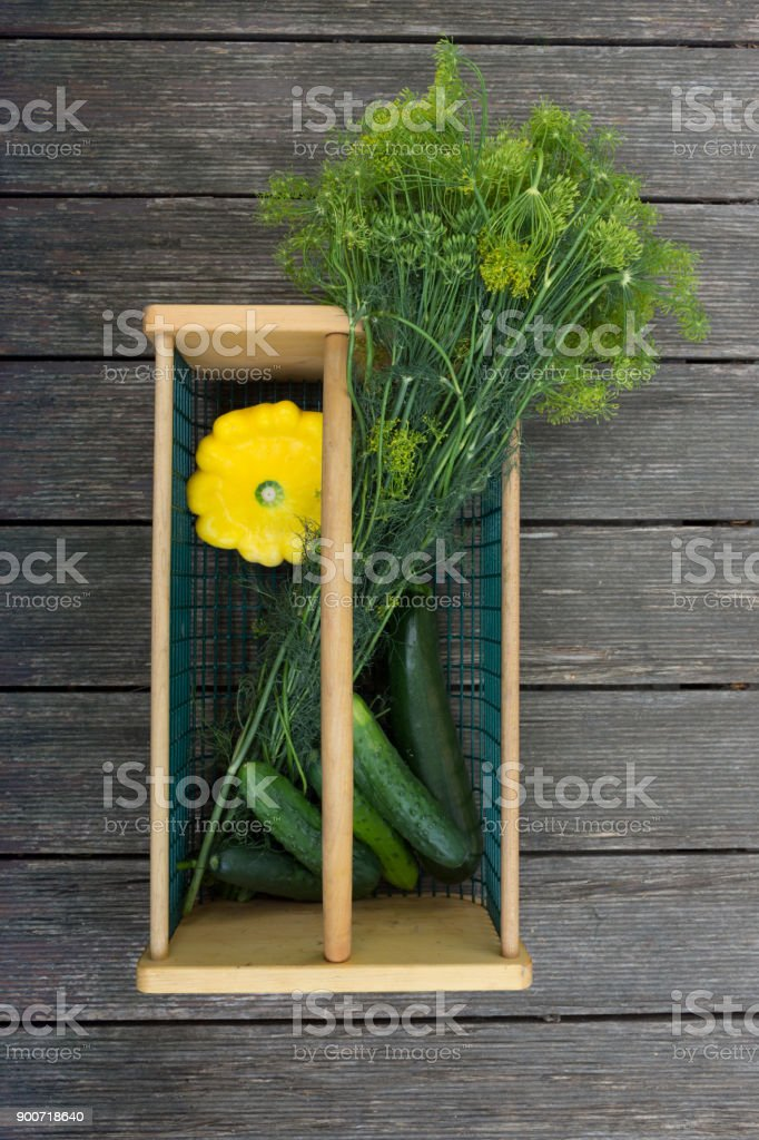 Vertical Basket with Dill, Patty Pan Squash and Cucmbers stock photo