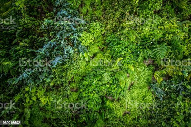 Vertical biowall garden picture id932016602?b=1&k=6&m=932016602&s=612x612&h=cz0unsdssotdvgpyqo8avco9se0ge9suatouuc2gdko=