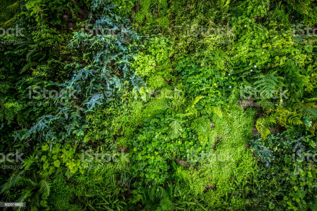 Vertical BioWall Garden stock photo