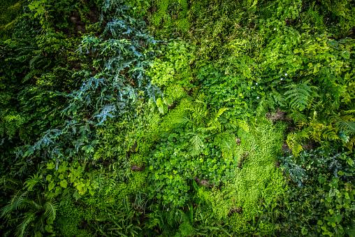 立式 Biowall 花園 照片檔及更多 全畫面 照片
