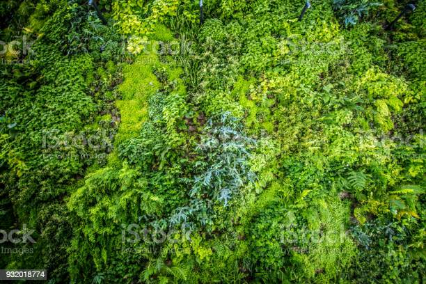 Vertical biowall garden picture id932018774?b=1&k=6&m=932018774&s=612x612&h=nbrzvgdcelhnqetyfsvfukouavm671fjusmxf1vrngq=
