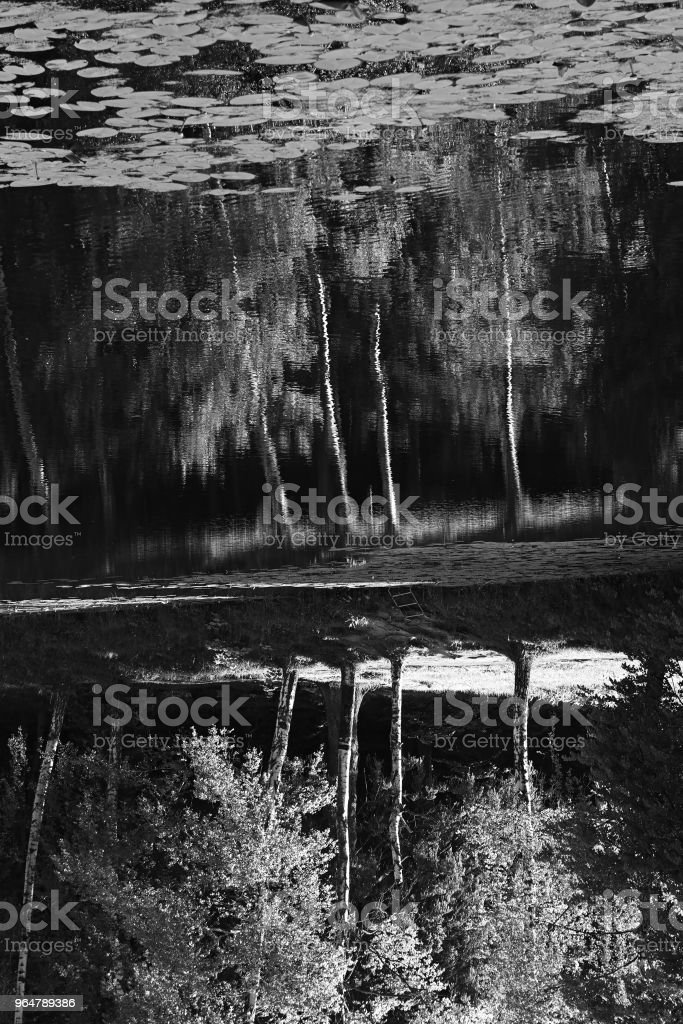 Vertical black and white park pond reflections background royalty-free stock photo
