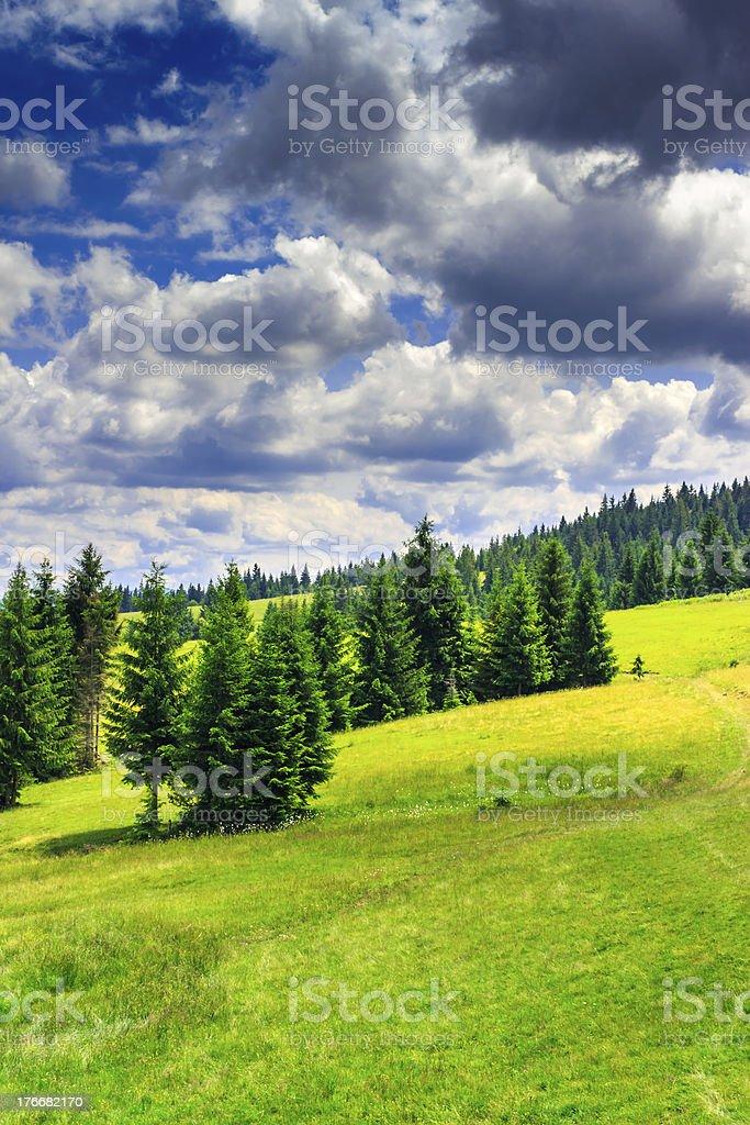vertical compensación en un bosque de montaña después de la tormenta foto de stock libre de derechos