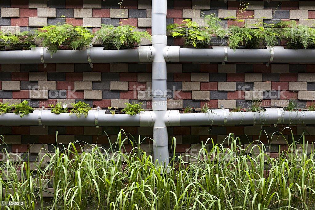 Vertical Container Garden Stock Photo Download Image Now Istock