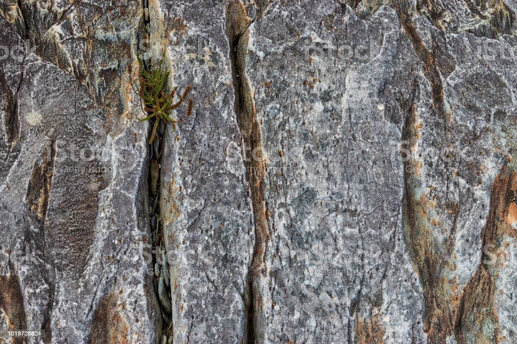 Vertical cracks in a weathered rock outcrop with plants beginning to grow in one of the cracks. stock photo