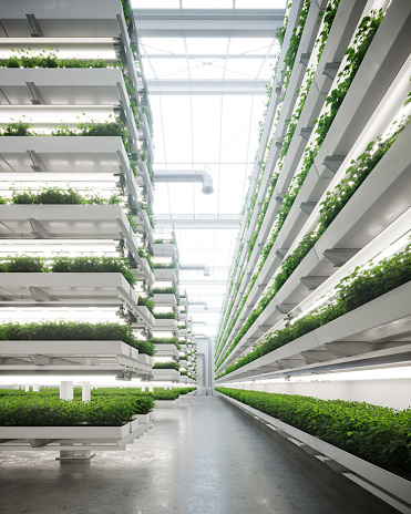 Large greenhouse with a modern vertical farm inside
