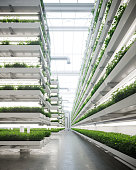 istock Vertical farm generated digitally inside a greenhouse 1281634304