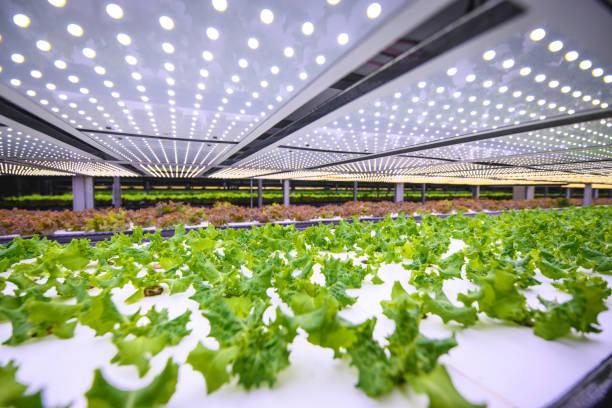 vertical farming offers a path toward a sustainable future - теплица стоковые фото и изображения