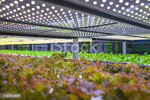 Vast indoor farming facility with stacks of carefully tended living lettuce crops lit by an array of LED lights.