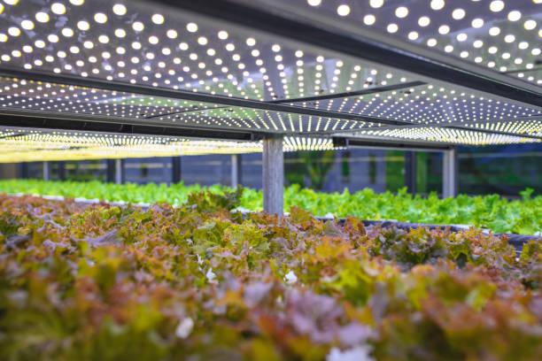 Vertikale Landwirtschaft bietet einen Weg in eine nachhaltige Zukunft – Foto
