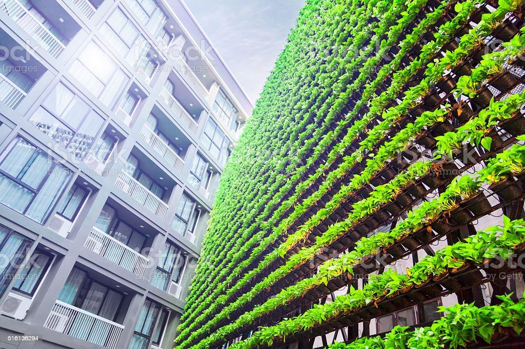 Jardín Vertical – verde – BioWall pared - foto de stock
