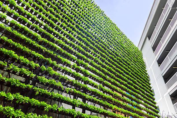 vertikal garten – grüne wand – biowall - urbaner garten stock-fotos und bilder