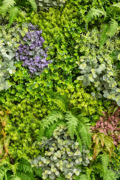 vertical garden living flower and fern wall replica - juicy stock photos and pictures