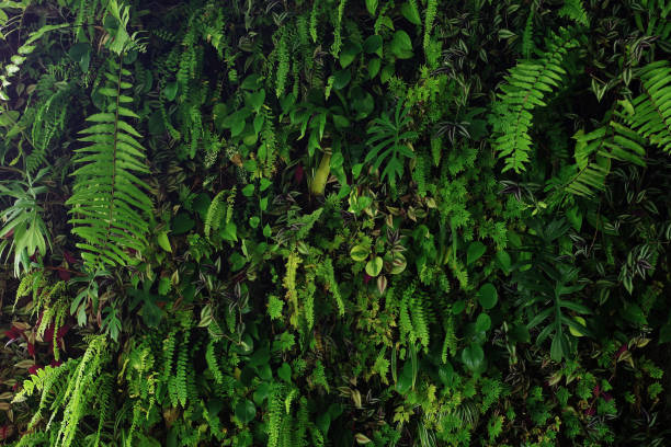 vertical garden nature backdrop, living green wall of devil's ivy, ferns, philodendron, peperomia, inch plant and different varieties tropical rainforest foliage plants on dark background. - moss stock pictures, royalty-free photos & images