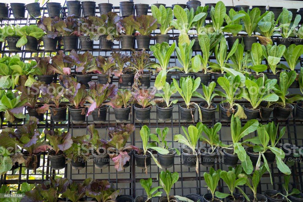 Vertikale Garten Grüne Gemüse Wand Stockfoto Und Mehr Bilder Von