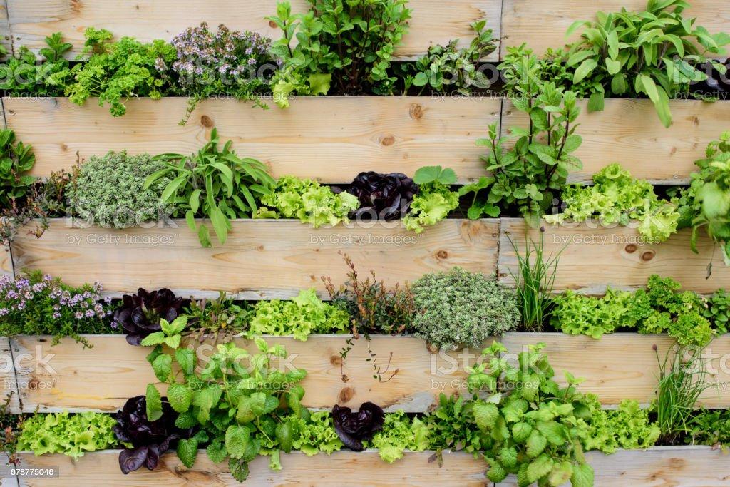 Jardín Vertical - foto de stock