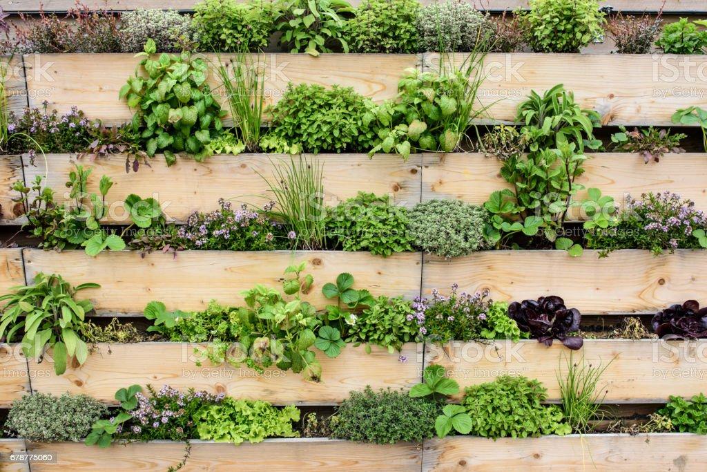 Vertical Garten – Foto
