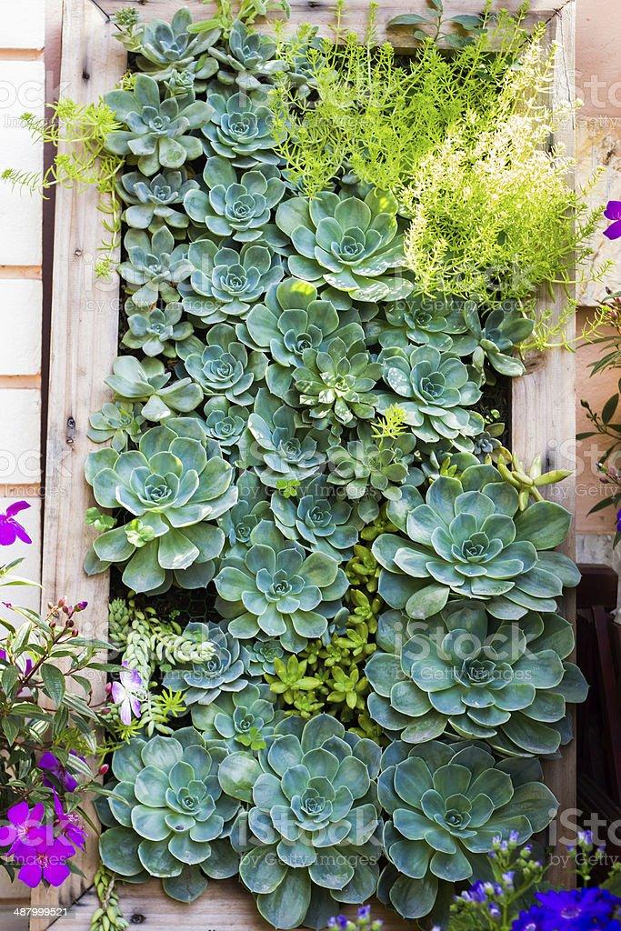 vertical garden style of Kalanchoe stock photo