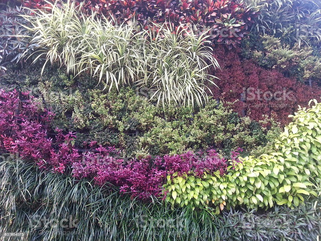 Vertical Garden Wall Texture Stock Photo More Pictures Of 2015