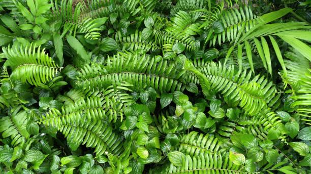 vertikale gärten mit tropischen grünen blatt, kontrast - farn stock-fotos und bilder