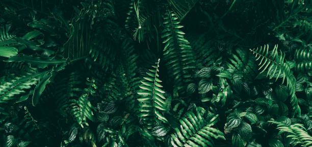 vertical garden with tropical green leaf, dark tone - lush foliage stock pictures, royalty-free photos & images