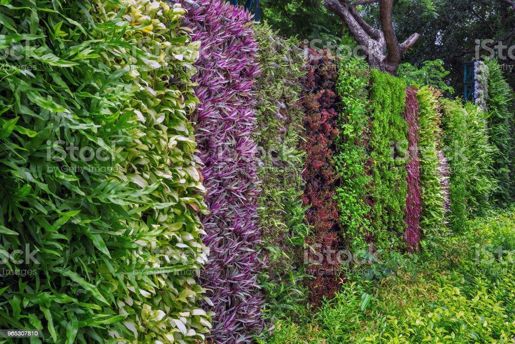Vertical gardening in the park. zbiór zdjęć royalty-free