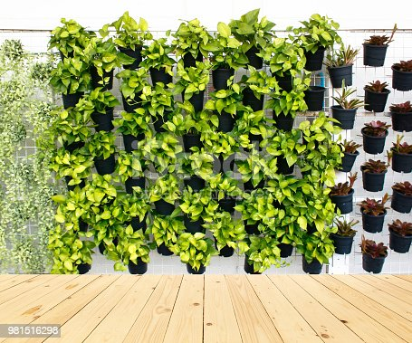 vertical green plant pattern in many black pot on wood floor background