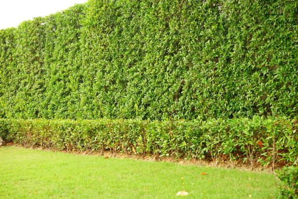 Vertical green Wall Garden stock photo
