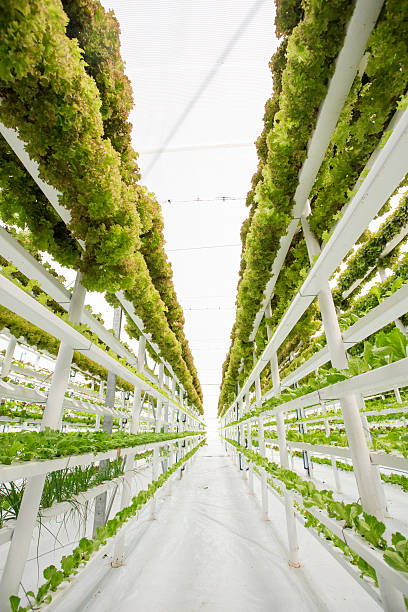 vertical hydroponic farm - vertical stock pictures, royalty-free photos & images