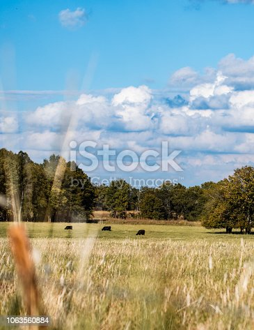 Vertical landscape of an agricultural countryside with cattle grazing in the distance and blue sky with clouds.