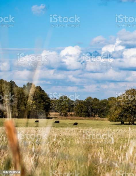 Photo of Vertical landscape cow pasture