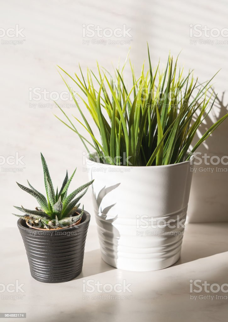 Verticale composition minimaliste de deux plantes en pot - Photo