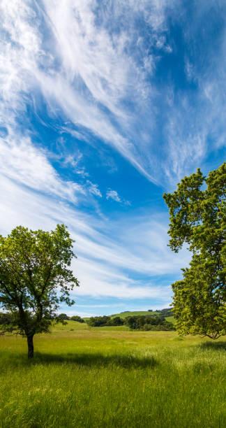 Vertical Pano of Springtime grassland stock photo