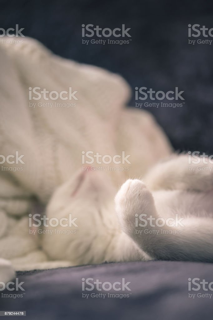 Vertical Photo Of Few Weeks Old Kitten With White Fur And