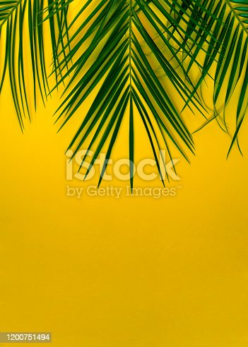 1153498948 istock photo Vertical photo of orange with palm branches. 1200751494