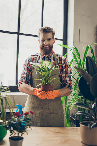 istock Vertical portrait of young handsome bearded smiling happy florist holding plant in his hands 942809652