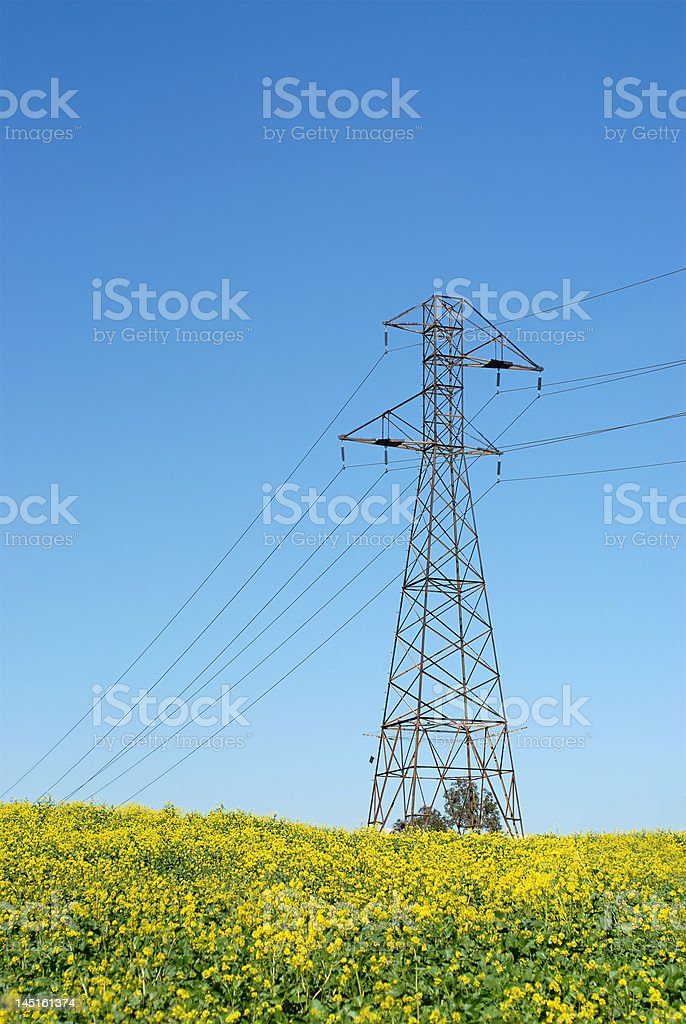 Vertical shot of a power line royalty-free stock photo