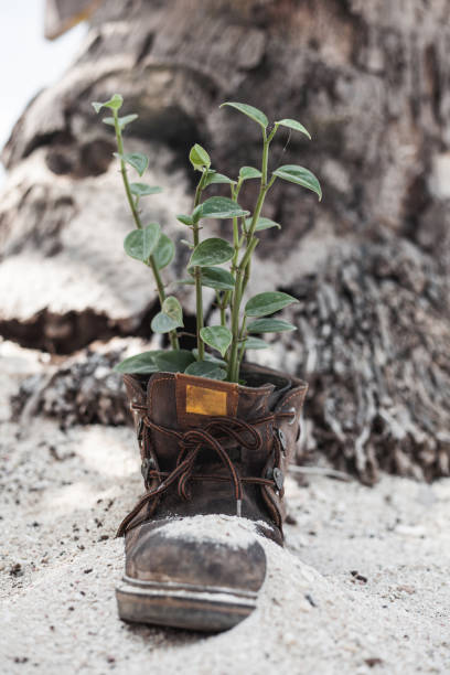Vertical shot of an old boot with the plant grown inside stock photo