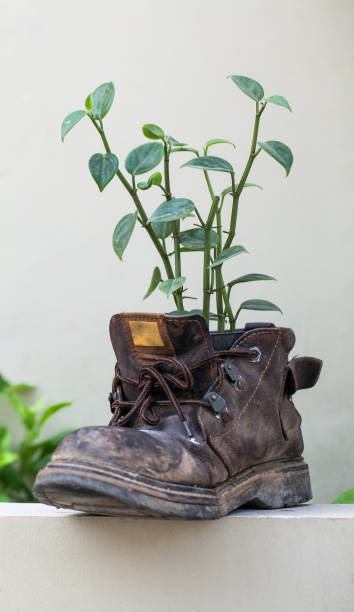 Vertical shot of an old boot with the plant stock photo