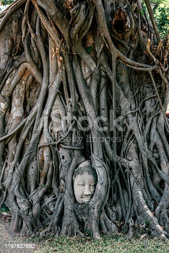 Remember to explore. Head of Sandstone Buddha in The Tree Roots at Wat Mahathat, Ayutthaya, Thailand. Copy space