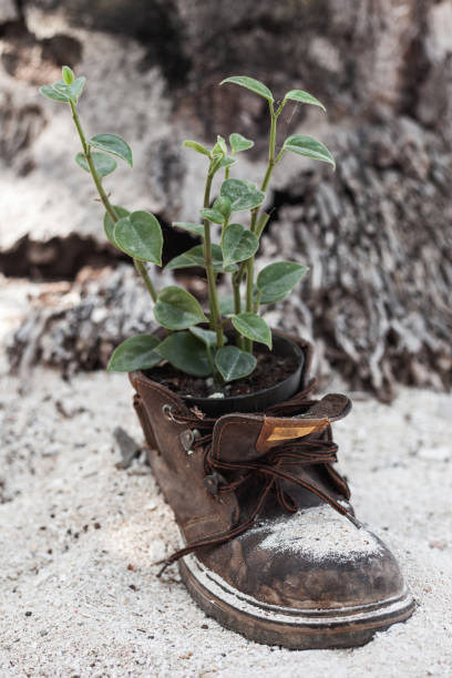 Vertical shot of old boot with the plant grown inside stock photo