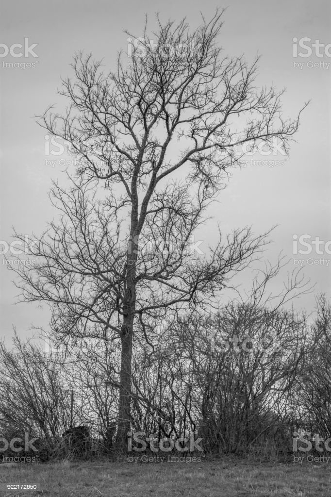 Vertical tree monochrome stock photo