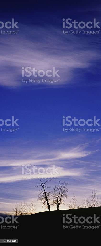 Vertical Tree Silhouette royalty-free stock photo